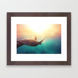 Sea Turtle - Underwater Nature Photography Framed Art Print