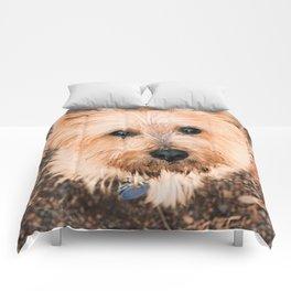 My Companion Comforters