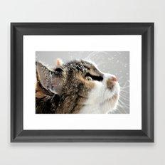 >^..^< .... in the Snow Framed Art Print