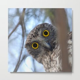 Australian Powerful Owl Metal Print