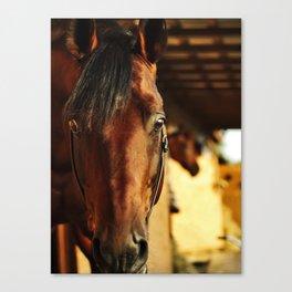 horse collection. Trakehner Canvas Print