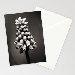 Grape Hyacinth black and white Stationery Cards