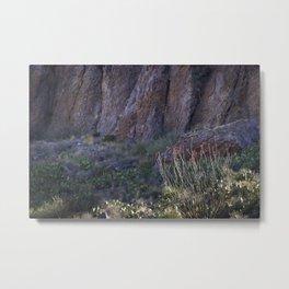 Canyon Ocotillo Metal Print