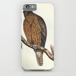 Radiated Goshawk (Astur radintus) illustrated by Elizabeth Gould (1804-1841) for John Goulds (1804-1 iPhone Case