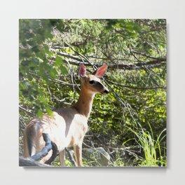 Watercolor Deer, Eastern Whitetail 10, Kejimkujic, Nova Scotia, Canada, High Alert Metal Print