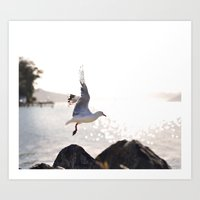 Seagull takes flight over Dunedin's MacAndrew Bay Art Print