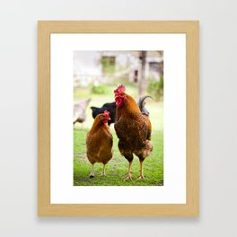 young Rhode Island Red chickens Framed Art Print