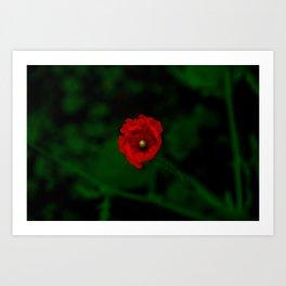 Popping Poppy Art Print