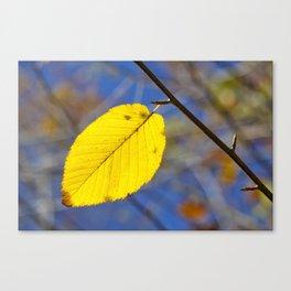 Yellow leaf against blue sky Canvas Print