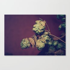 Hop Head Canvas Print