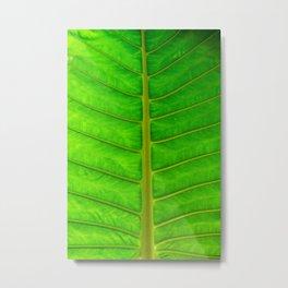 Palm Print Metal Print