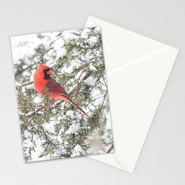 Cardinal on a Snowy Cedar Branch (sq) Stationery Cards
