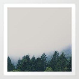 muir woods | mill valley, california Art Print
