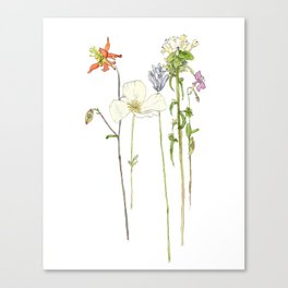 Ashland Wildflowers Canvas Print