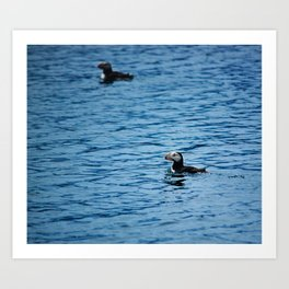 Two Puffins Photography Print Art Print