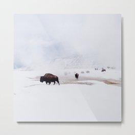 Wild Bison in Winter Metal Print