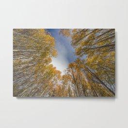 Fall in Bend Metal Print