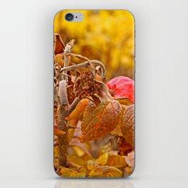 Autumn leafs iPhone Skin