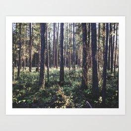 Pine Forest in Sunlight Art Print
