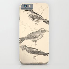 Vintage Print - Companion to Gould's Birds of Australia (1877) - Wood Swallows iPhone Case