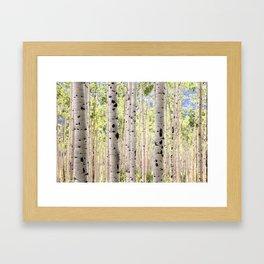 Dreamy Aspen Grove Framed Art Print
