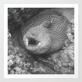 Coiled fat eel Art Print