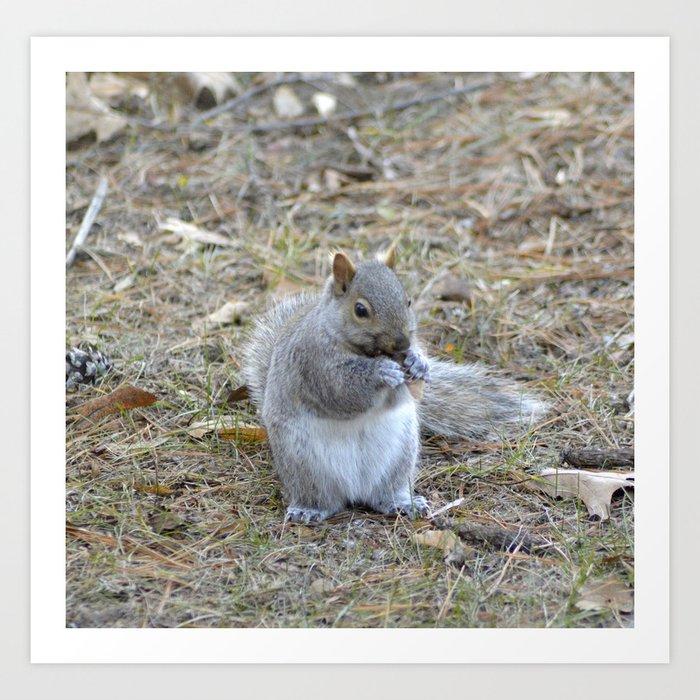 Gray Squirrel Munching on Pine Cones Art Print