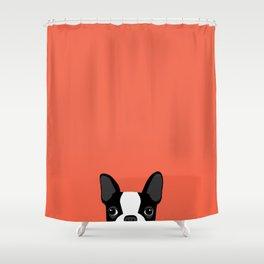 Boston Terrier Peek - Black on Sunset Red Shower Curtain