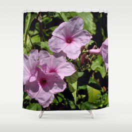 Bush Morning Glory - Ipomoea fistulosa 1 Shower Curtain