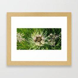 Wild Mountain Thistle Framed Art Print