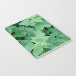 Settled Notebook