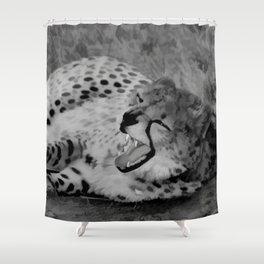 Cheetah fangs Shower Curtain