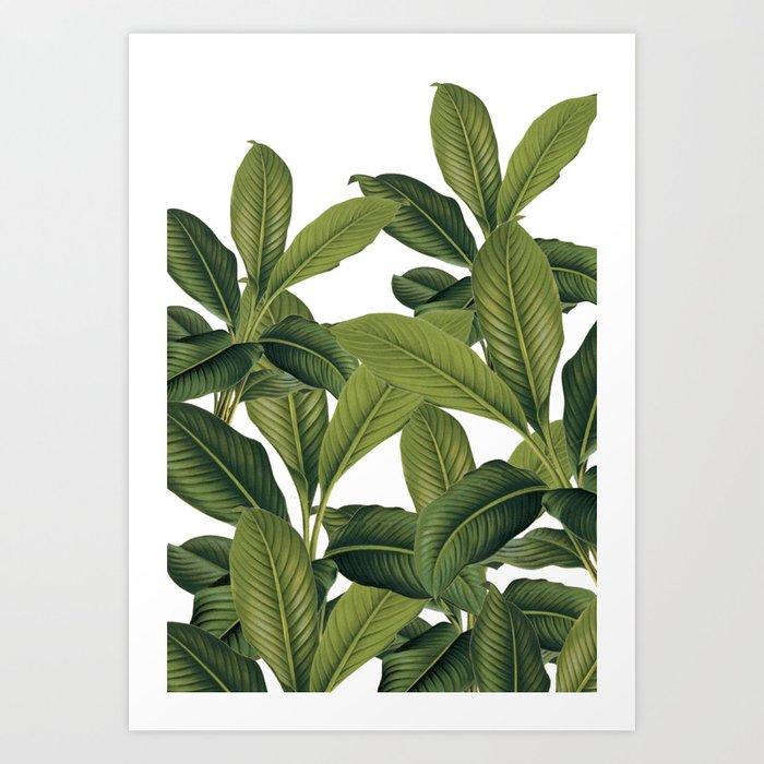 Love these leaves Art Print