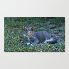 Cat Painting Canvas Print
