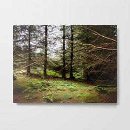 Woodland Copse Metal Print