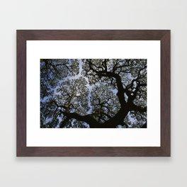 Oak Tree Reaching For The Sky Framed Art Print