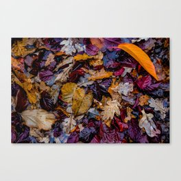 October Understory Canvas Print