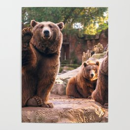Spectecular Group Gracious Grizzly Bears Sitting In Habitat Waving At Camera Ultra HD Poster