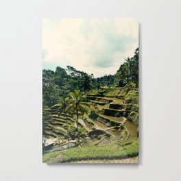 Tegallalang Rice Terraces, Bali Metal Print