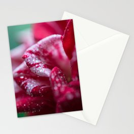 Red Striped Rose Stationery Cards