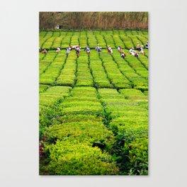 Porto Formoso tea gardens Canvas Print