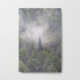 Looking for the sky. Pinsapo Tree. Endemic tree Metal Print