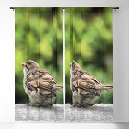 Little Feather Tasting Blackout Curtain