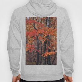 Forest Trees Hoody