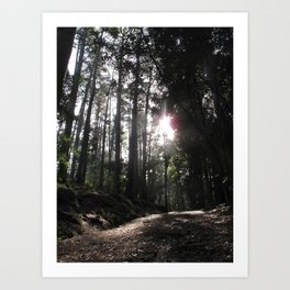 Forest Walks 2 Art Print