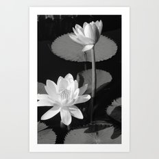 Black & White Lilypad Art Print