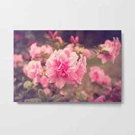 Pink Azalea Bliss Metal Print