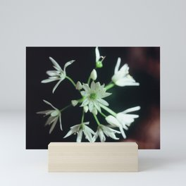 Wild Garlic Mini Art Print