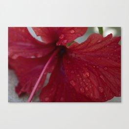 Belize Rain Canvas Print
