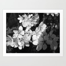 Places in Black & White: Plum Tree 7 Art Print